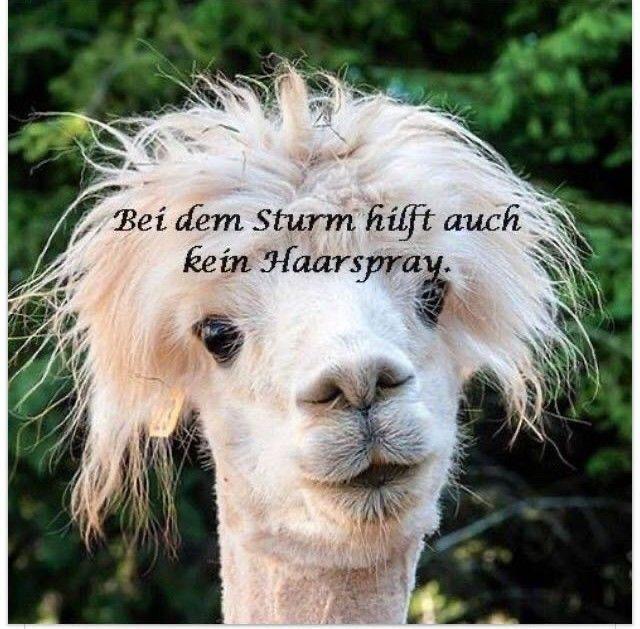Sturm Sabine – ich lasse Sie nicht im Sturm stehen… Für eine Top-Absicherung zu solchen Ereignissen stehe ich Ihnen für eine Beratung sehr gerne zur Verfügung, damit Sie bei zukünftigen Wetterkapriolen den richtigen Partner an Ihrer Seite haben!